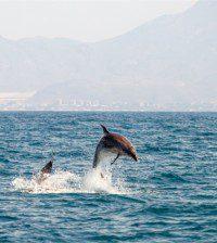 Delfines - Upitravel