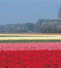Holanda - Upitravel
