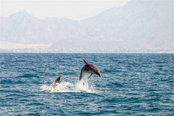 Delfines – Upitravel