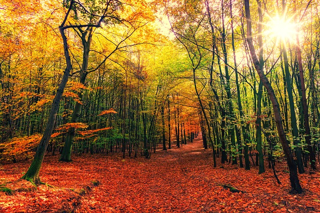 destino-otoño-IP