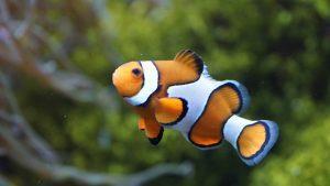 peixe-300×169