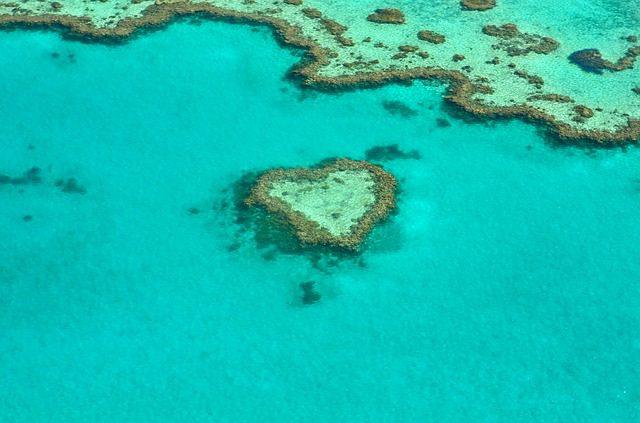 barrera coral – IP
